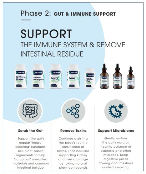 Phase 2 - Gut and Immune Support - Lg