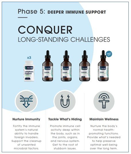 Phase 5 - Deeper Immune Support - Lg